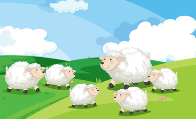 A group of sheep in field
