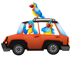 Parrot travel by car
