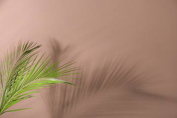 Wall Mural - Fresh tropical palm leaf on color background
