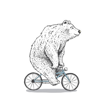 polar bear is riding a bicycle.Hand drawn style.Vector illustration