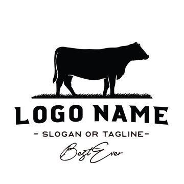 Vintage Cattle / Beef logo design inspiration vector
