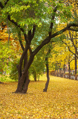 Trees with green foliage on a carpet of yellow fallen leaves. Autumn landscape