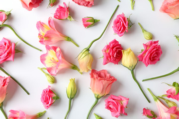 Beautiful blooming flowers on white background