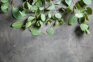 Eucalyptus branches with fresh green leaves on grey background Wall mural