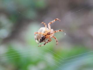 Spider - fototapety na wymiar