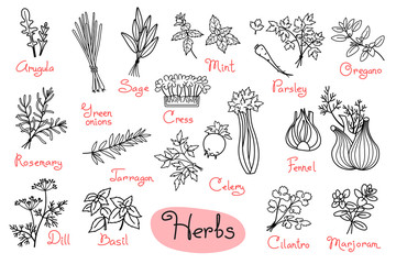 Set drawings of herbs used in cooking for design menus, recipes and packages product