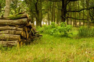 Log stack in Oak coppice