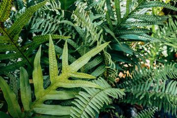 natural fern background