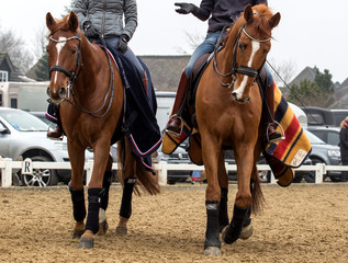 Two dressage horses and riders