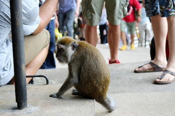 a monkey near people on the street in malaysia