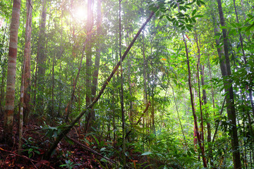 Landscape of tropical rainforest in a morning, Malaysia