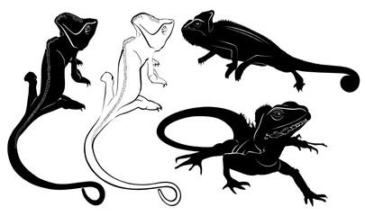 set of silhouettes of reptiles lizard, chameleon