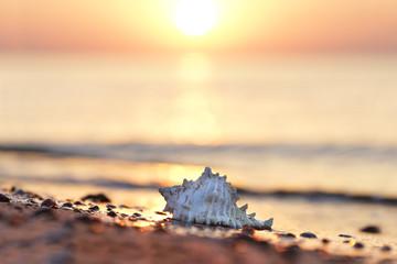 Muschel am Strand - romantisch