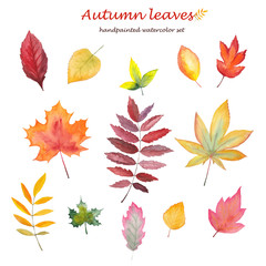 Hand-drawn watercolor autumn leaves on white background