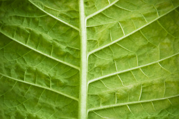 ecology, green leaf