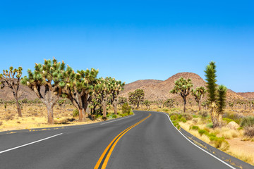 Road at Joshua Tree National Park