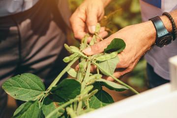 Agronomist presenting soybean hybrid to businessman