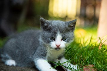 Portrait of a little kitten outdoor on grass