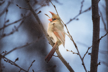 Close-up of bird perching on branch during snowfall