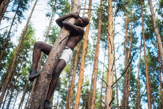 Male black with no shirt climbs a tree