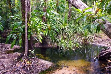 Tropical Rain forest in Australia