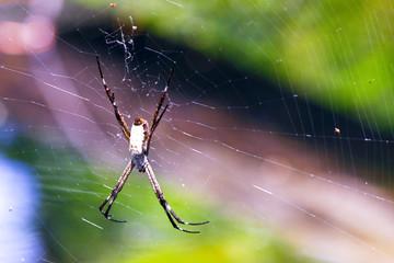 Spider on net in Australia
