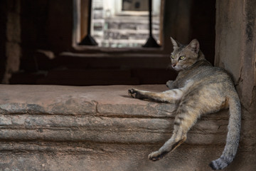 Brown cat in ancient temple, Angkor Wat, Cambodia. Lazy cat resting on historical building. Angkor Wat tourist photo