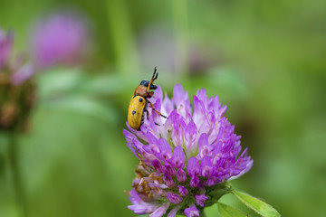 Close up of insect pollinating purple flower