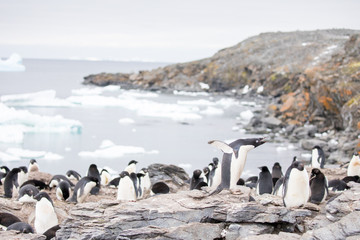 Acrylic Prints Penguin penguin in the arctic