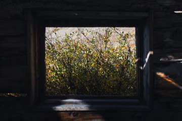 Fall foliage through an abandoned cabin window.