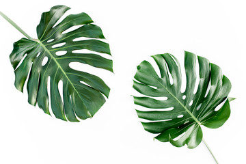 Tropical palm leaves Monstera isolated on white background. Flat lay, top view
