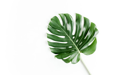 Tropical palm leaf Monstera isolated on white background. Flat lay, top view