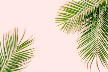 Exotic background, pattern with tropical palm leaves on pink background. Flat lay, top view minimal concept.