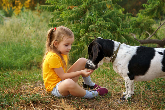Little girl and mongrel dog outdoors. Child is feeding pet with hand. Children and animals.