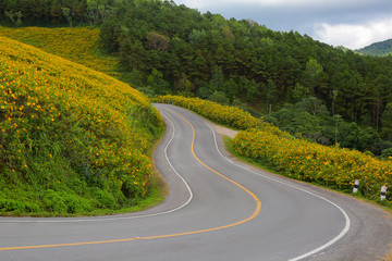 Curving mountain road through wildflowers.