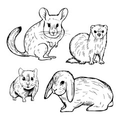 Hand drawn pet rodents. Rabbit, hamster, chinchilla and ferret. Vector sketch  illustration.