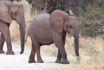 Elephant family crossing a road