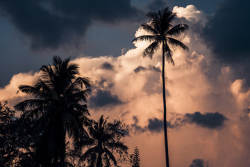 Silhouettes of palm trees agaist the sunset sky background
