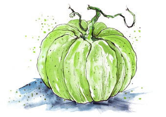 Pumpkin by a watercolour. On isolated white background. Watercolor postcard, illustration.