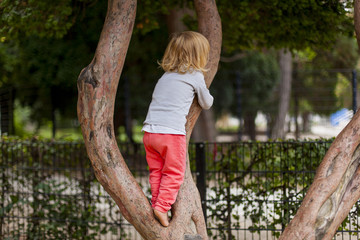 Kleines Kind klettert auf Baum. Child climbing on tree.