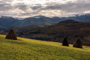 haystacks on the hill. gloomy late autumn landscape with overcast sky. snow on tops of distant mountain ridge