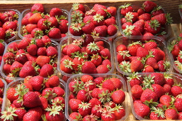 A Display of Pummets with Freshly Picked Strawberries.