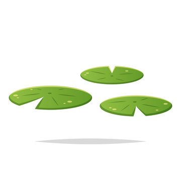 Water lily pad vector isolated