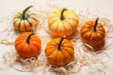 Different Colorful Pumpkins, Autumn Thanksgiving and Halloween Background