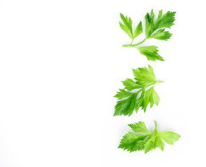 Fresh green celery leaves on white background, food for healthy concept