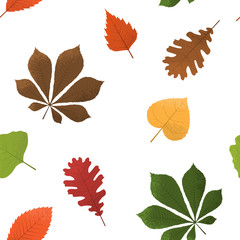 Autumn background with leaves. Seamless pattern, vector illustration