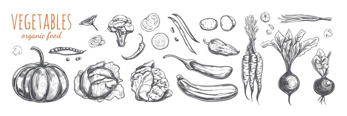 Vegetable collection. Vector hand drawn sketch illustration