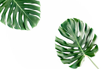 Wall Mural - Tropical palm leaves Monstera isolated on white background. Flat lay, top view