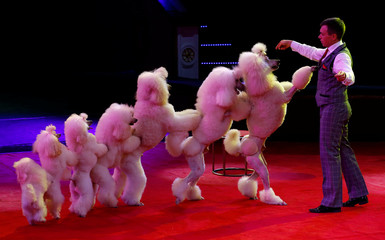 "Artist performs with dogs during the presentation of the new show ""Circuses of the world"" at the Belarus State Circus in Minsk"