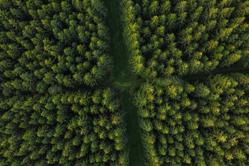 Aerial view of forest paths, Germany. Photo taken with Drone